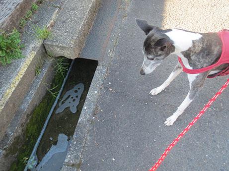 2014 5 19 ココア散歩1