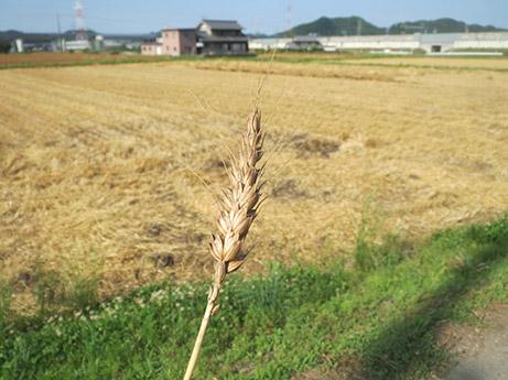 2014 6 17 ココア散歩1