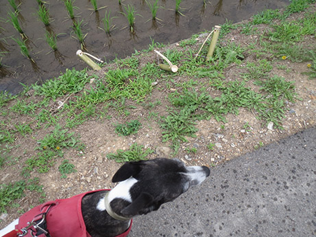 2014 6 24 ココア散歩2