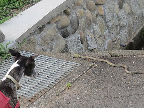 2014 6 25 ココア散歩1