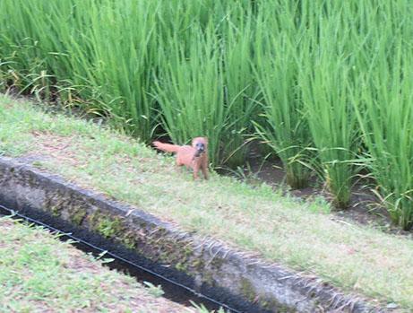 2014 7 17 ココア散歩5