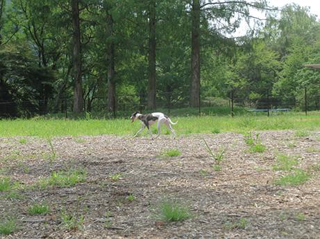 2014 7 20 畜産センター4