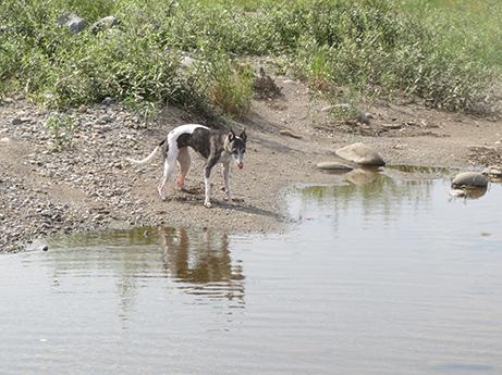 2014 7 28 ココアと長良川1