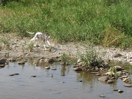 2014 7 28 ココアと長良川3