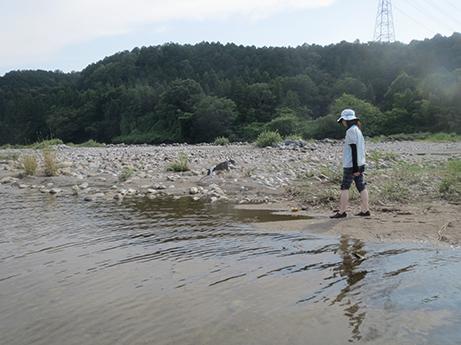 2014 7 28 ココアと長良川6