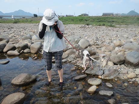 2014 7 28 ココアと長良川8