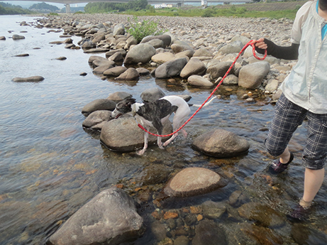 2014 7 28 ココアと長良川9