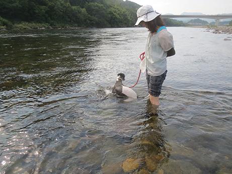 2014 7 28 ココアと長良川11