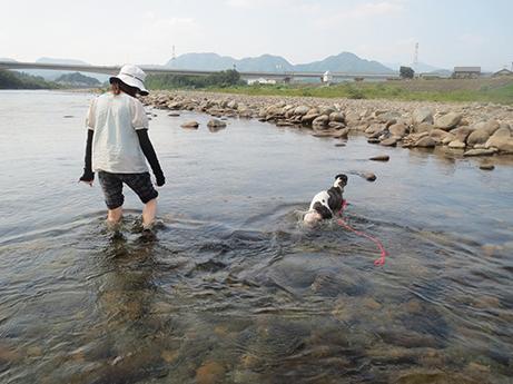 2014 7 28 ココアと長良川14