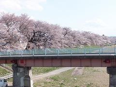 一目千本桜5
