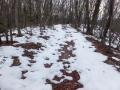 薄くなった雪