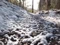 檜林の出口