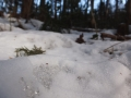 新しい雪の下で古い雪が光っていた