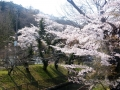 三居沢の春