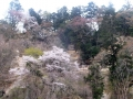 青葉城址の崖