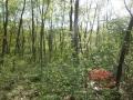 森の奥まで注ぐ光