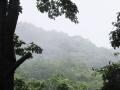 雨降り頻る森