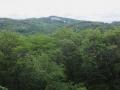 放山に続く森