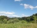 森と草原と青空
