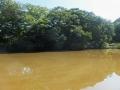 茶色い五色沼