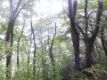 雨の北斜面