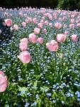 20140407_flower3