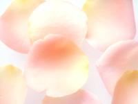 petal.jpg