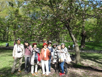 公園内桜の木の下で記念撮影