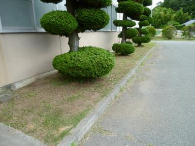 草刈り 1