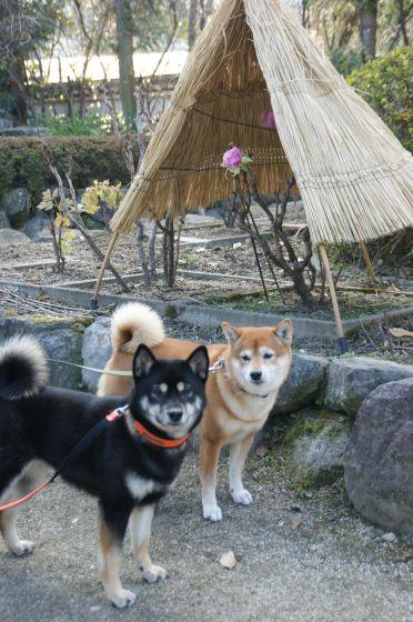 奈良 石光寺
