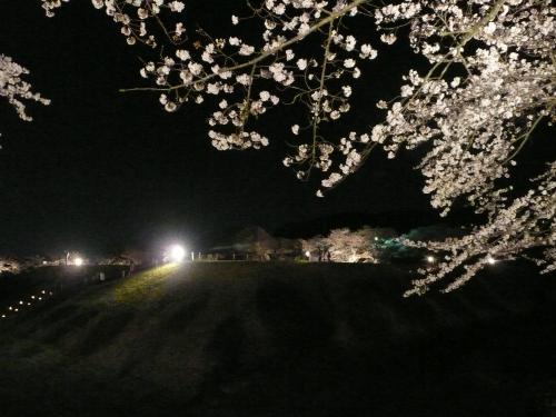 石舞台古墳・夜桜②