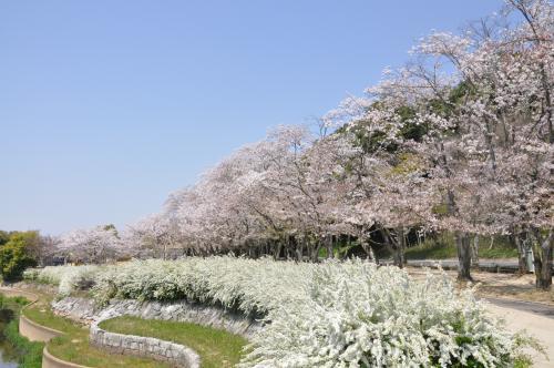 耳成山公園・春