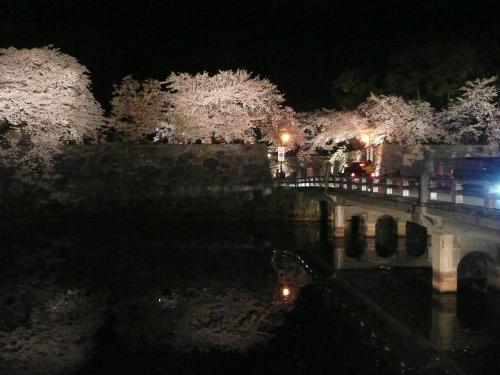 彦根城の夜桜②