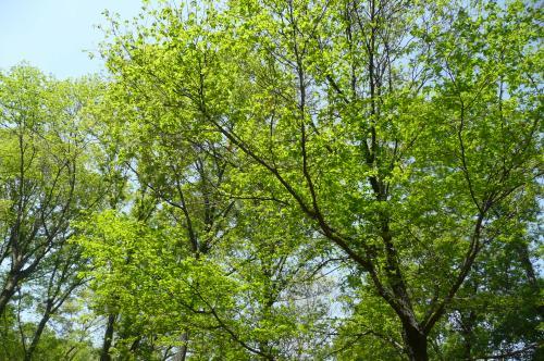 陽楽の森 2014・春