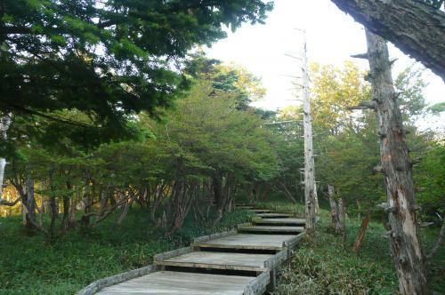 正木ヶ原への木道