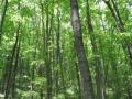 今日の雑木林