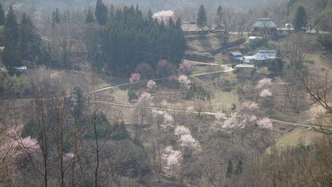 生坂村・山寺と桜