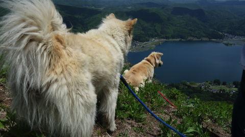 木崎湖を見下ろす「まろん」と「すもも」