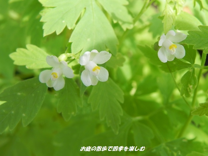 huusenkazura6_20140901203420dc5.jpg