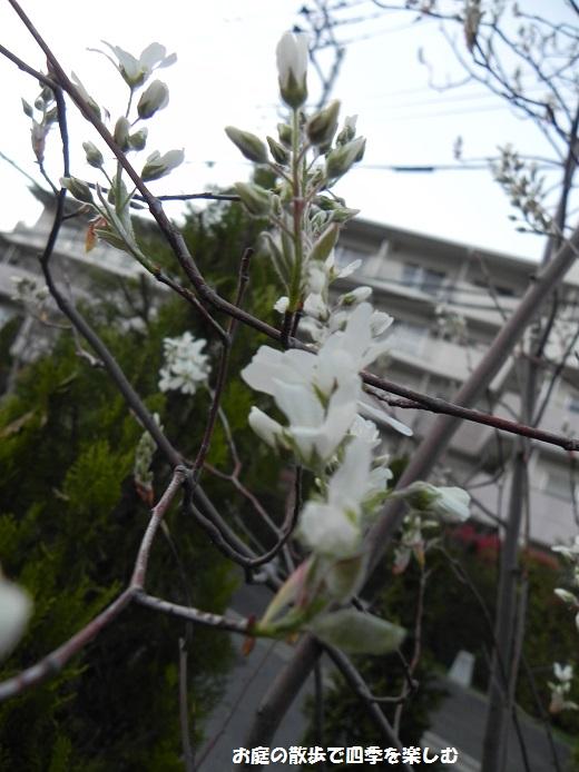jyu-nberi-10_201404092227509e2.jpg