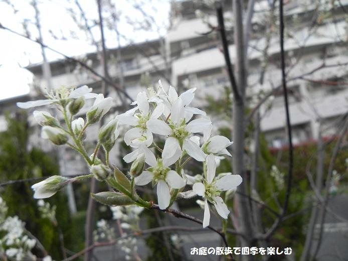 jyu-nberi-11_20140409222753ced.jpg