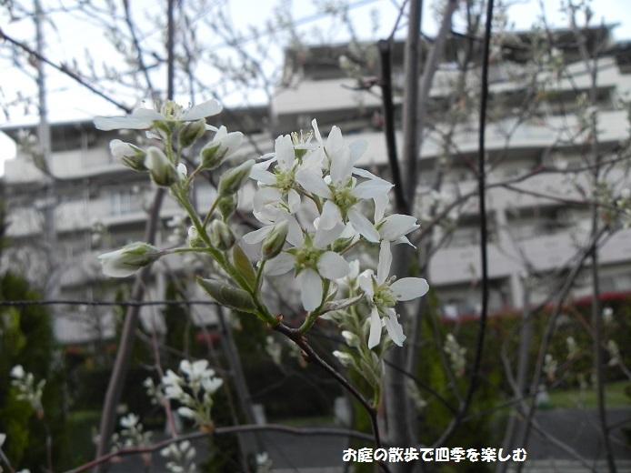 jyu-nberi-12_201404092227469cd.jpg