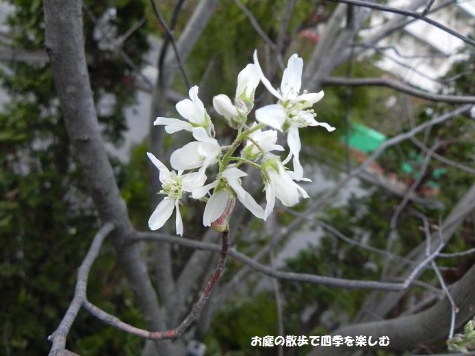jyu-nberi-9_20140409222749bfe.jpg