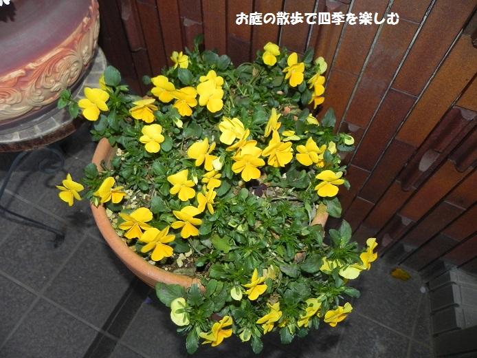 kiiro_2014042120013489b.jpg