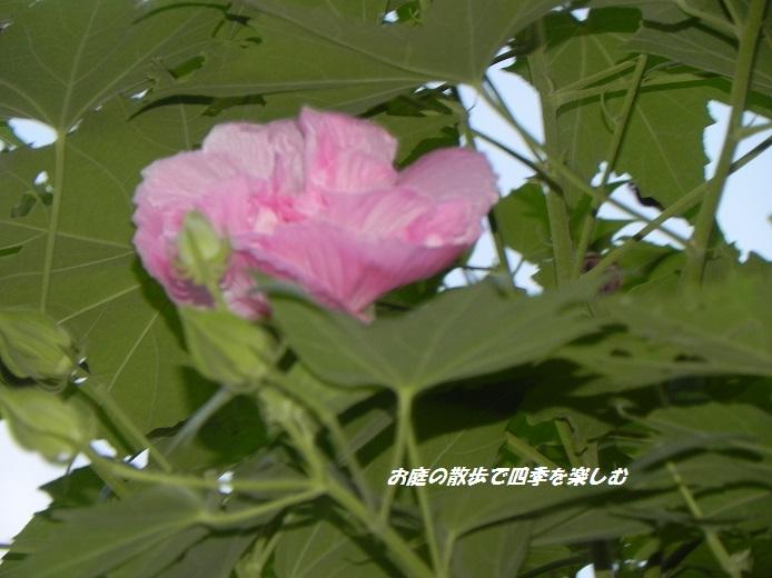 suihuyou3_20140831120322f93.jpg
