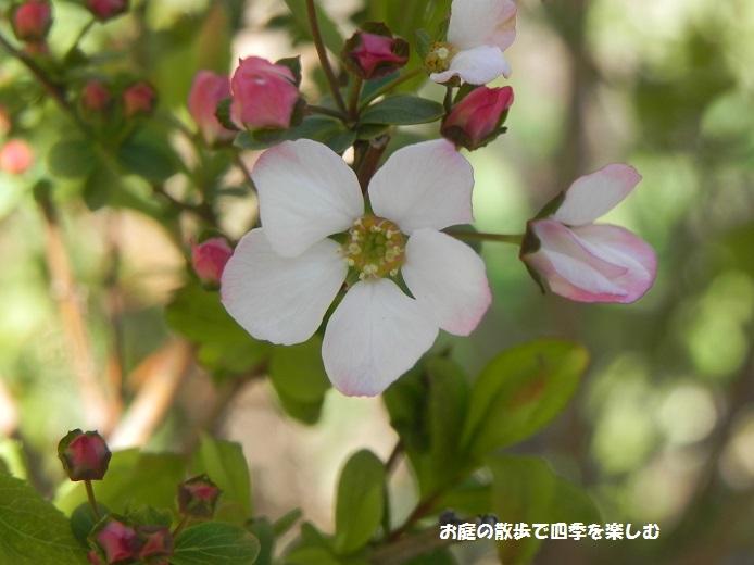 tiisaihana5_20140328013858488.jpg