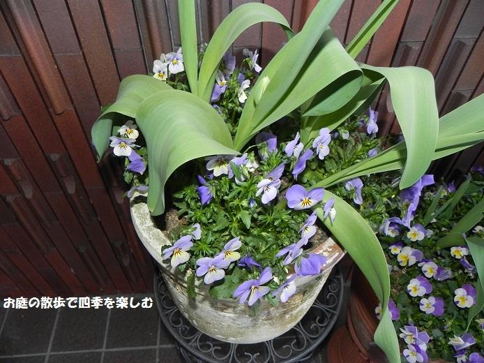 yoseue13_20140413093251ad1.jpg