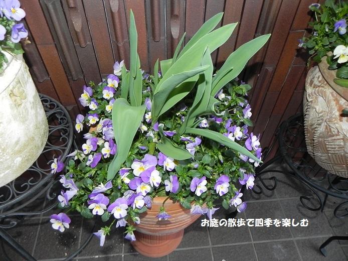 yoseue14_20140413093252809.jpg