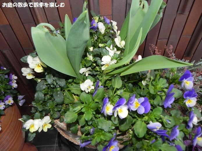 yoseue15_201404130932545eb.jpg