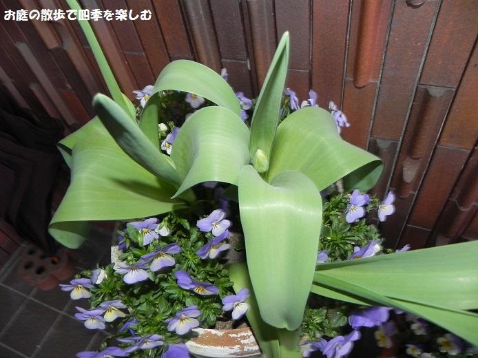 yoseue16_20140413093248764.jpg
